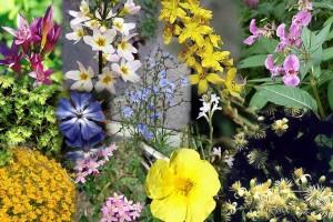 цветя за есенциите на д-р Бах